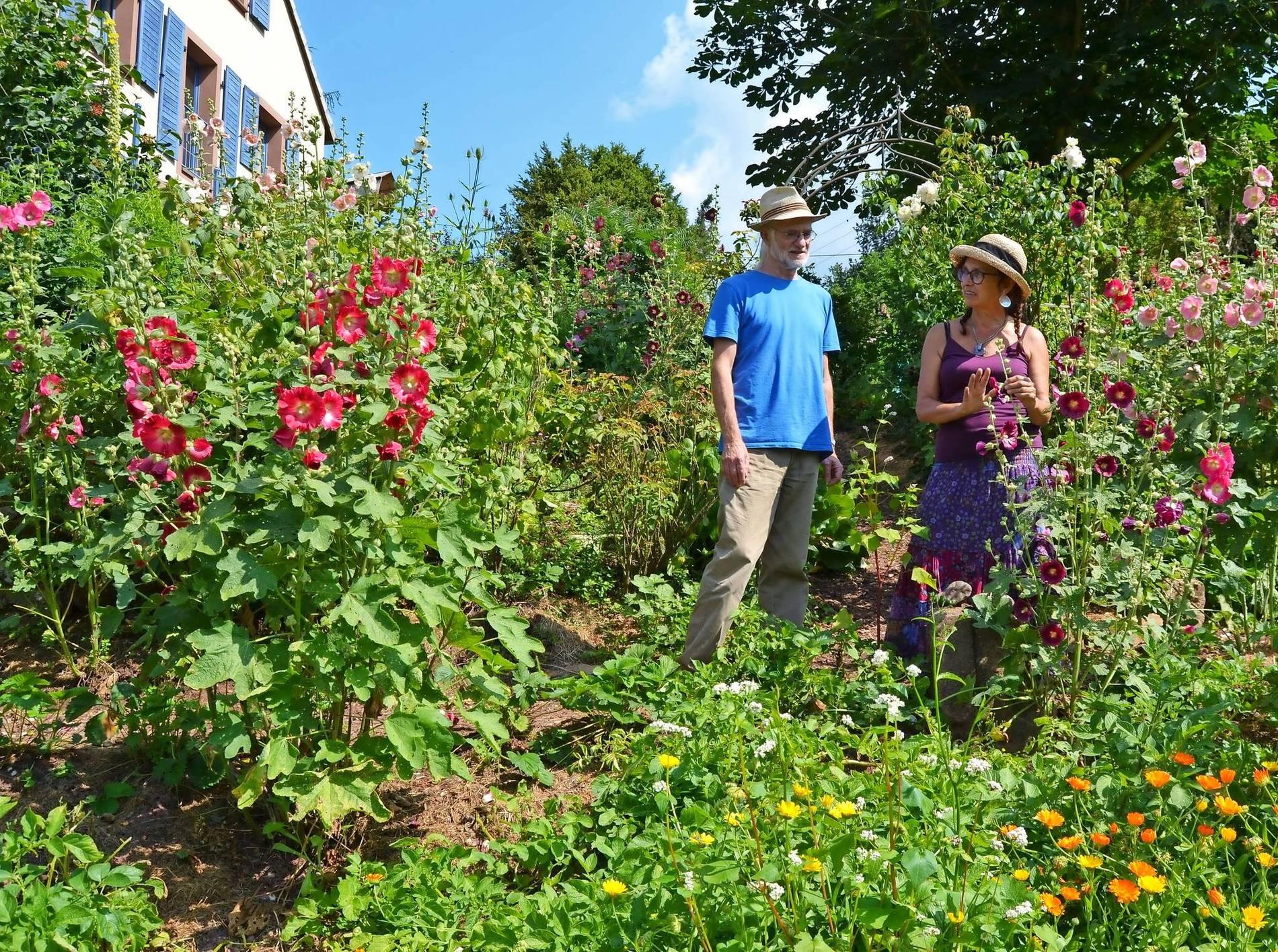 Mein schöner Garten: Sommerfreude mit Stockrosen